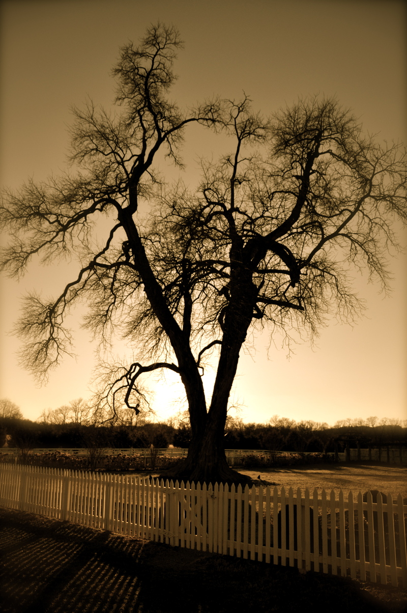 An erie tree that Lauren took a picture of.