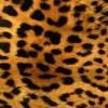Leopard print lover avatar
