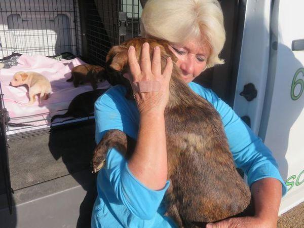 When Animal Rescue Groups Need Rescuing, The Sidewalk Angels Step In