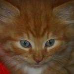 fluffybubble5 avatar