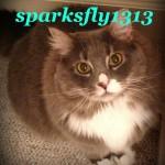 sparksfly1313 avatar
