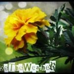 LikeTheWeather13 avatar