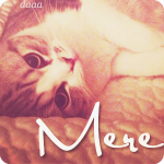Miss Meredith avatar