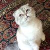 taylor13thecat avatar
