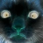 Taylor Sweet avatar